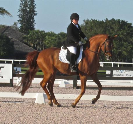 Eleanor Brimmer pilots new partner London Swing, a 2002 Hanoverian, in Grade III test.