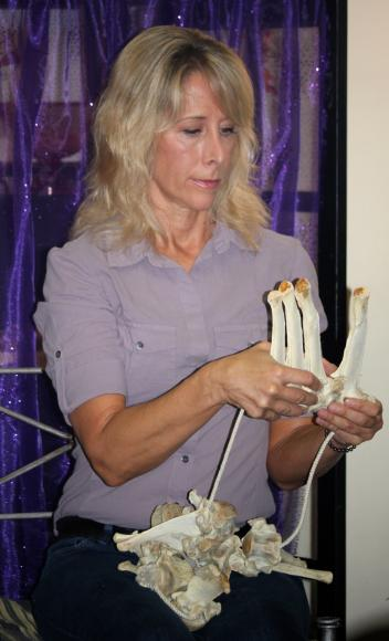 Physical therapist Stacey Brown elaborates on the motions of the equine spine during ShowChic's October ShopTalk.
