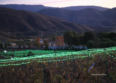 The beautiful view at Kingsway Winery in Temecula, California where the Quailhurst Christmas trees were on sale.