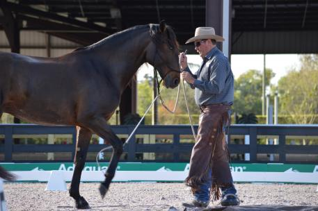 Pat Parelli works with Delicioso Interagro during the 2013 Dressage Summit. (Photo: courtesy of Parelli Natural Horsemanship)