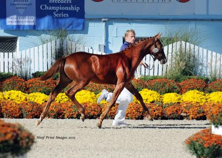 Isadora ISF (UB40 x Watch Me) Foal Champion