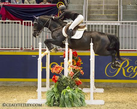 Jordan MacPherson of Toronto, ON claimed the 2013 National Talent Squad Series Championship in front of a hometown crowd at the Royal Horse Show. Photo Credit - Cealy Tetley