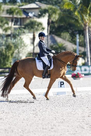 Judy Sloan rides Rusty 223 by Rubenstein, (Age14) at the Global Dressage Festival as an Amateur Photo; SusanJStickle