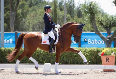 Juan Matute Jr and 5 yr old Jamaicano de Ymas III qualify in Spain for the 2014 FEI World Dressage Breeding Championships for Young Horses (Photo: MariaGuimon.com)