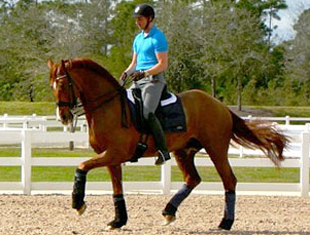 Patrik Kittel schooling Scandic at the Jim Brandon Equestrian Centre in Palm Beach, Florida