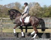 Kyra Kyrklund in Florida this year will be hosted by Wellington Classic Dressage at the Palm Beach County Jim Brandon Equestrian Center January 25-26, 2014.