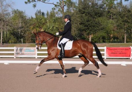 Leslie Eden, riding Lets Dance, a 6 yrs. old gelding working towards the Young Horse Program  Photo:Lynn Eden Deer