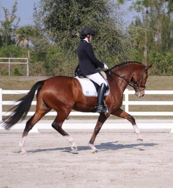Lesley Eden and Let's Dance win Third Level Test 3 at the 2013 World Dressage Masters Photo:Lynn Eden Deer