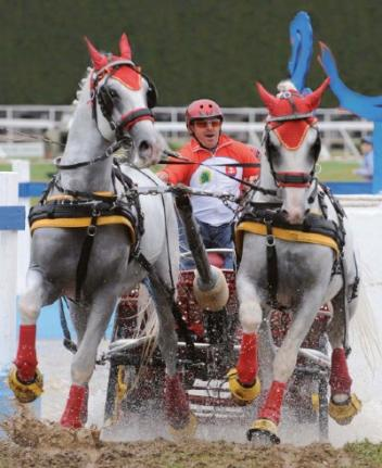 Slovakian driver Miroslav Matuska is one of the leading contestants at the upcoming FEI World Pair Driving Championships on home ground at Topoľčianky.