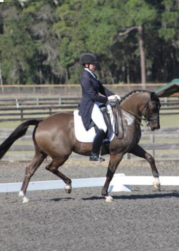 Anna Marek and her own Unico G in the Grand Prix at the Ocala Winter Dressage JanuaryShow Photo: Bill Wertman