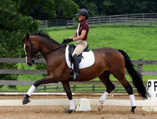 Ryniki - SOLD through DressageDaily by Dorie Addy-Crow Dressage Inc.