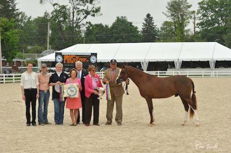 Orchard Hills Dragonflyy was named 2014 Best Young Pony. Photo (c) The Book LLC.