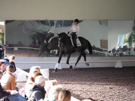 Mette Larsen and Deklan during the 2014 Succeed/USDF Trainer's Conference. (Photo courtesy of Mette Larsen)