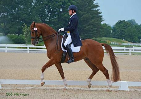 Michael Barisone traveled 10 hours from Long Valley, NJ with HF Victor (Gribaldi X Miana X Burggraf) owned by Virginia Alling and won the Grand Prix with a 67.66 and the Grand Prix Special on Sunday with a 68.208. Photo: BobTarr.com
