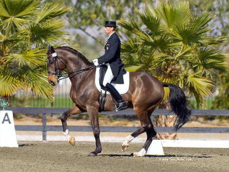 "Steffen Peters and his new partner ""Legolas"" will make their international competition debut at this weekend's Mid-Winter Dressage Fair CDI-W/Y/J in Burbank, CA. (Photo: Terri Miller)"