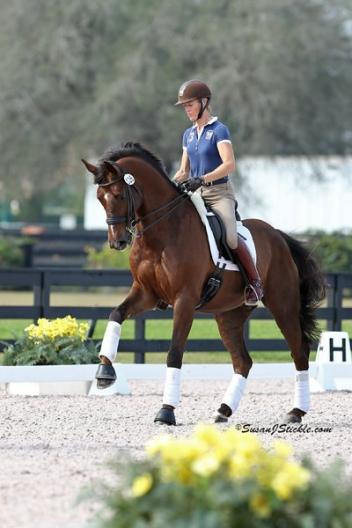 Tuny and Woodstock (Havel x Contango), a 10 yr old Dutch Warmblood prepare for Europe CDI Tour 2013 Photo; Astrid Appels