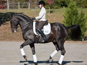 Jennifer Baumert and Marydell Farm's Hanoverian Stallion Don Principe (1999 by Donnerhall out of SPS daughter of Prince Thatch xx) schooling at the training location for Cloverlea Farm at Cross Creek Farm in Columbus, North Carolina.Credit: Pat Girard Photography