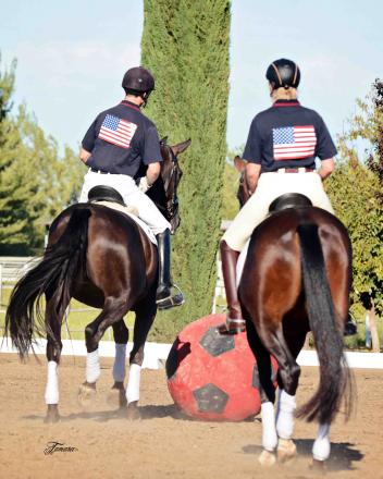 """The auction horses competing in a """"soccer"""" match!"""