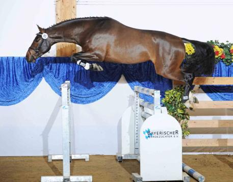 Que Amor SB, owned by Shahin Banki from Los Angeles, CA was awarded both the dressage and jumping champion title!