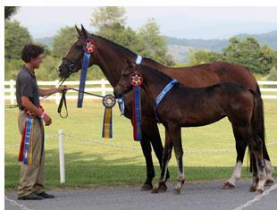 Quintessa MF - Reserve Champion Filly of 2010 Handled by Brendan Curtis (Photo Mary McKenna)