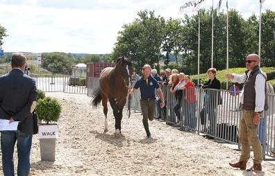 """It was """"thumbs up"""" for Rolf-Goran Bengtsson and Casall Ask in the First Horse Inspection for Jumping horses at the ECCO FEI European Championships 2013 in Herning, Denmark today.  The Swedish rider is set to defend the Individual title he won in Madrid, Spain two years ago when the action gets underway with the opening Speed competition tomorrow afternoon.  Photo: FEI/Jacob Melissen."""