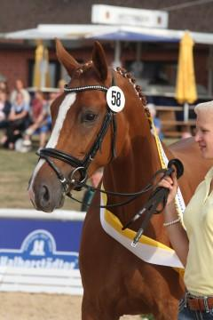 2013 Champion St.Pr.A. Royal Rose by Royal Classic/Weltmeyer