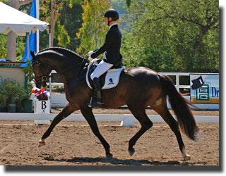 Sabine Schut-Kery and Sanceo at the 2011 Markel/USEF Young Horse Dressage Western Selection Trials at the Flintridge Riding Club in CA