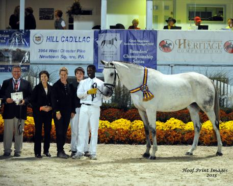 The Grand Champion and USDF Mare Champion of the 2013 Breed Show was the German Oldenburg mare Sanibelle by Sir Donnerhall I