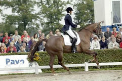 Deborah Hausman and Verona (2002 x Jazz x Glennridge) compete at the 2006 Pavo Cup Finals