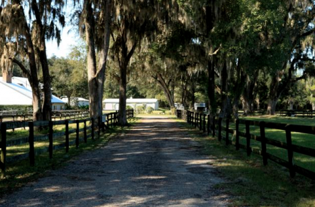 Enter into an oak draped driveway to your new Florida farm.