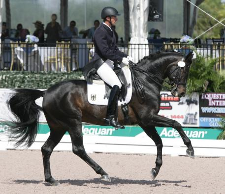 Shakespeare RSF, 10 years old, (Sandro Hit x EM Acapella (Arrian-EM Papagena/Pablo) competes this week in the 2014 CDIO Nations Cup with Marcus Orlob Photo: Betsy LaBelle