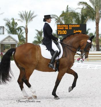 Custom Saddlery is offering a free set of Dressage Sport Boots (DSB) to anyone who makes a donation of  or more towards Harding's World Cup fund. (Photo: SusanJStickle.com)