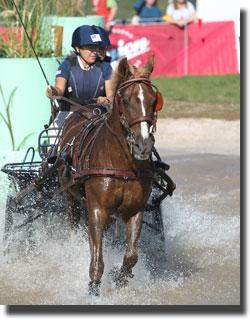 Shelly Temple and LR Ami B-Line part of the 2011 USA Pony World Championship Bronze Medal Team (Photo Marie de Ronde)
