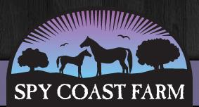 Spy Coast Farm specializes in the breeding and development of top quality performance horses at three locations along the east coast. The breeding, training, competition and sales arms of the business are all integrated. Spy Coast Farm is committed to making top quality performance horses available, and supporting the American Breeder with their Spycoast Farm Young Horse Series.