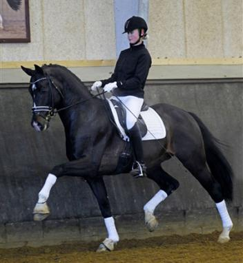 Audrey Maschue won the contest and selected Tailormade Temptation for her German Riding Pony Mare!