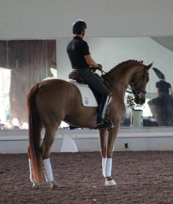 Steffen Peters on JJ Tates turning six year old mare, Summersby
