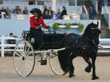 "Champion Driver Suzy Stafford and ""Sjaanje Sport"" in the turn- out class in the Dixon Oval at The Devon Horse Show. Photo Credit: Lisa Tossey"