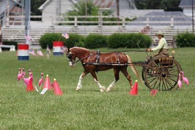Champion Driver Suzy Stafford and Llawen Taran owned by Jayne Treharne competing at the 2013 Susquehanna Whips and Wheels Driving Show. Photo credit: Jane Oheler