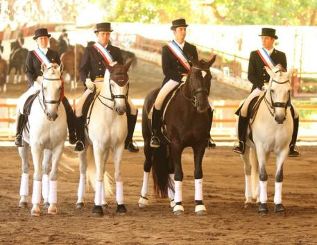 The gold medal winning Brazilian Team at the 2014 South American Games. (Photo: courtesy of Interagro Lusitanos)