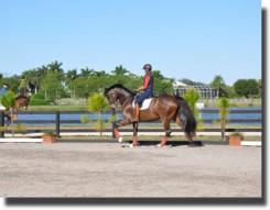 Yvonne riding at the Palm Beach Equine Sports Complex