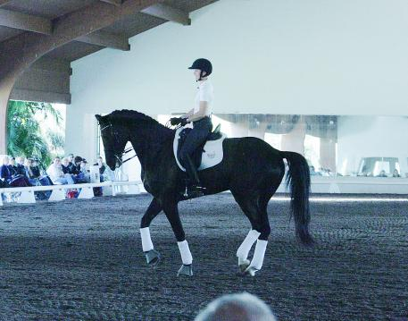 Angela Jackson riding Allure S at the 2014 USDF Trainer's Conference  Photo: Betsy LaBelle