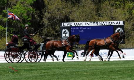 Chester Weber and his team during the Yellowframe Farm FEI Driven Dressage. (Photo courtesy of PicsofYou.com)