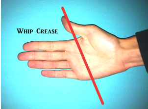 The whip should lay in the center crease of your palm.