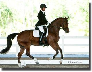 Melissa Mulchahey's Sir Velo was purchased in Euopre at the Westphalen auction. Credit: sharonpacker.com