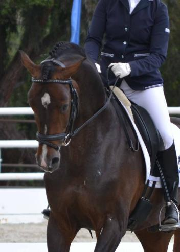 HorseShow.com announces the launch of a new online young horse dressage evaluation program with Janet Foy. (Photo: Jennifer M. Keeler)