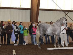 The Dressage for Kids Young Breeders Sport Horse Educational Program at Ten Broek Farm featured In Hand lessons. Photo: Carole McDonald