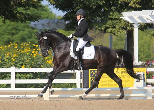 Don Fredo HD (Don Frederico x Pik Bube I) owned by Jessica Beier of Greystone Equestrian LLC and Heidi Degele