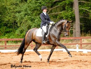 Dantino HW - 2008 Oldenburg Gelding - (Daddy Cool x Sandro Hit) available for sale.