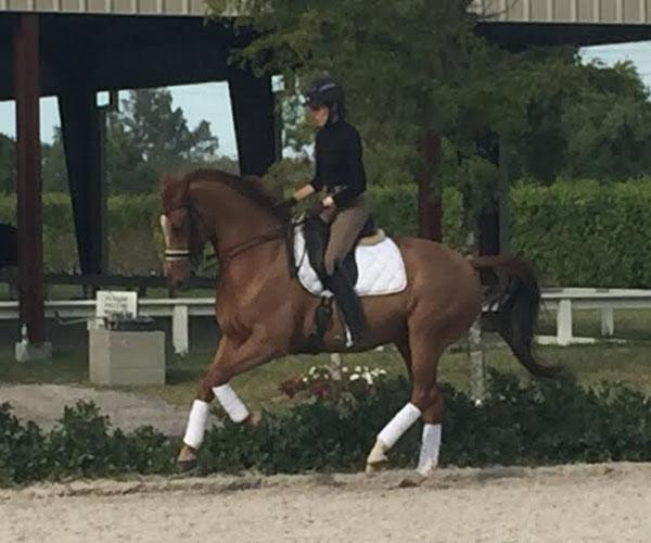 Able - 2005 KWPN Gelding ($100,000 and Up)