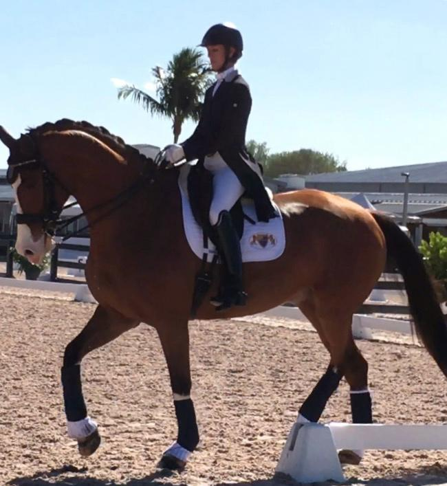 Action Ace - 2005 KWPN Gelding ($100,000 and Up)